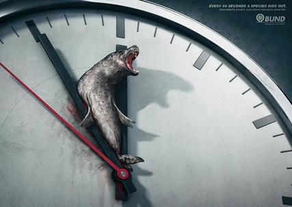 publicdad-mediomabiental-focas