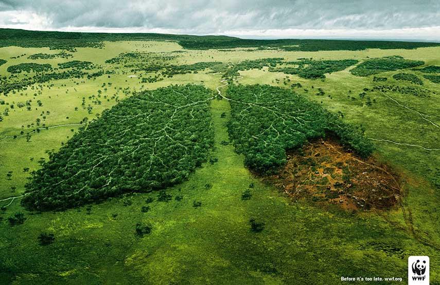 publicidad-medioambiental-selva