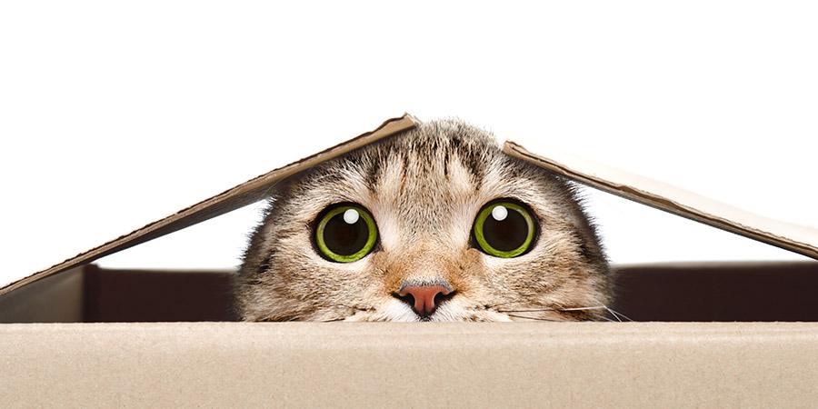 dia internacional del gato-caja