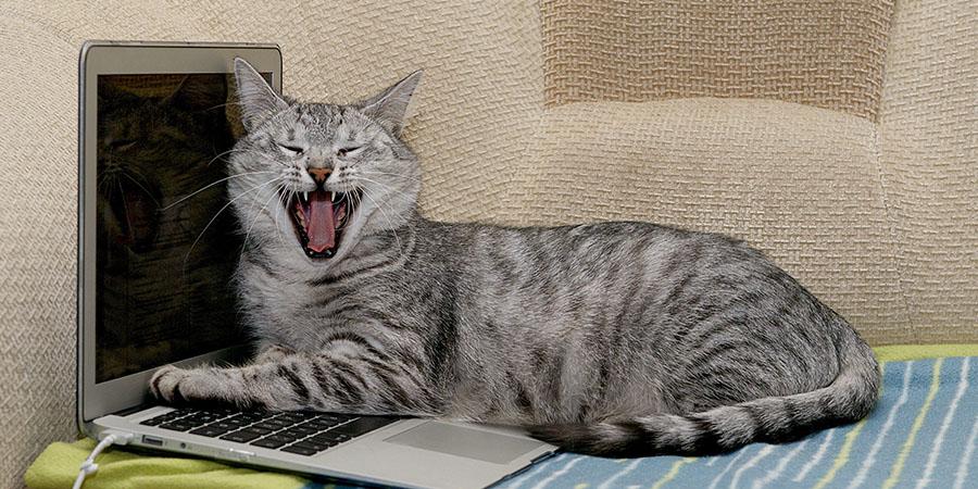 dia internacional del gato-gato riendo