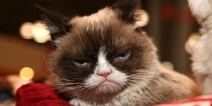dia internacional del gato-Grumpy Cat